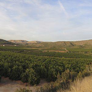 ferlasa-fertilizantes-productos-medio-ambiente-campo