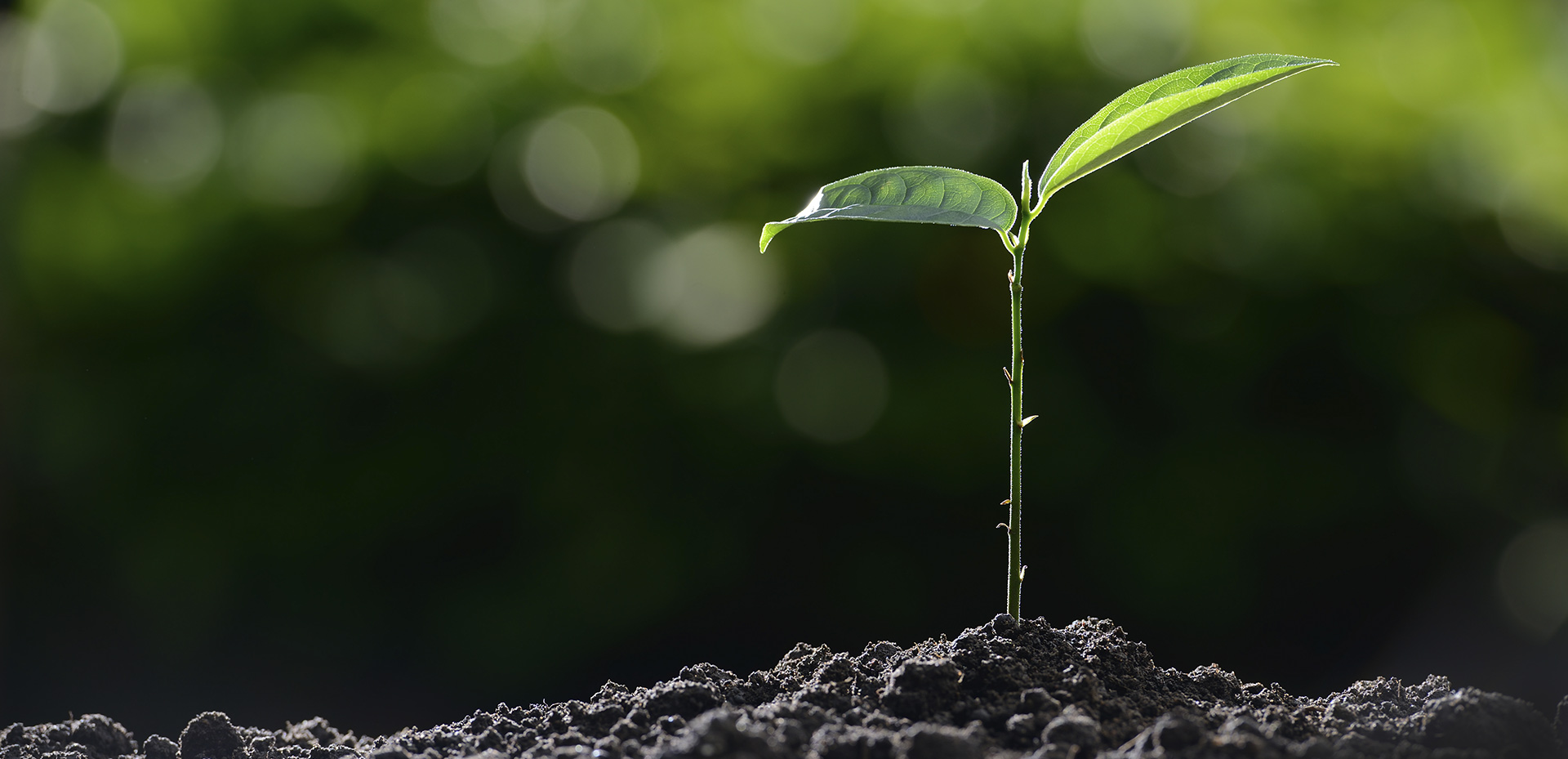 Desde FERLASA ayudamos a cultivar esperanza y cosechar futuro.